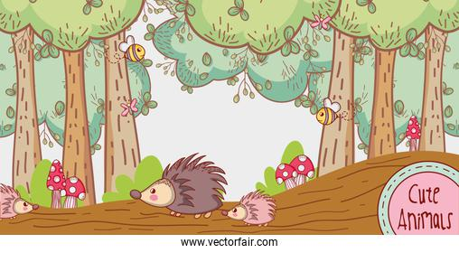 Porcupines in the forest