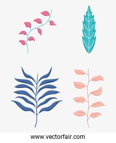 set nature plant leaves branches
