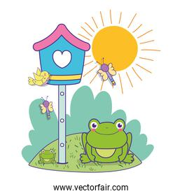 mailbox with bird and dragonflies with frog in the spring