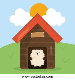cute little dog in wooden house pet character