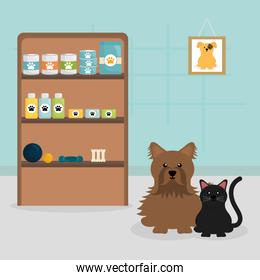 cute little dog and cat in veterinary