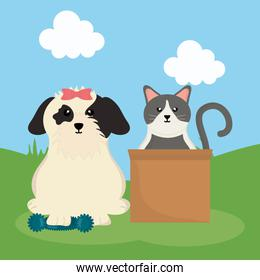 cute little dog and cat in landscape
