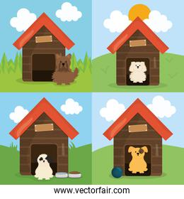 cute little dogs in wooden house pets characters