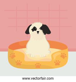 cute little dog with bed character