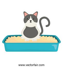 cute little cat in sand box character