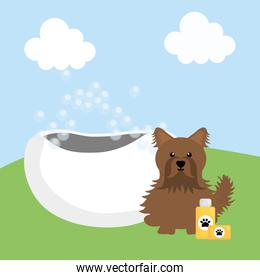 cute little dog with shampoo and tub in the field
