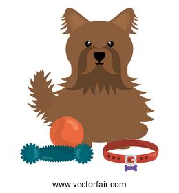 cute little dog with toy character