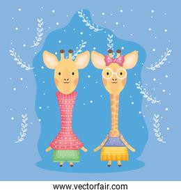 cute couple giraffes with clothes over blue