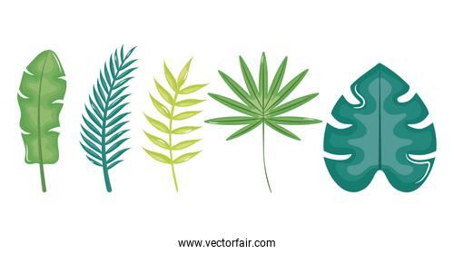 set of leafs palms tropical icons