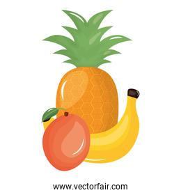 isolated banana and pineapple tropical fruits