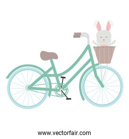 cute little rabbit in bicycle with basket