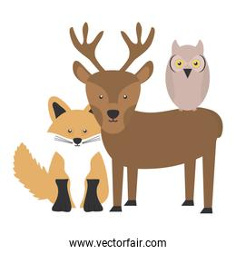 cute fox and reindeer and owl woodland characters