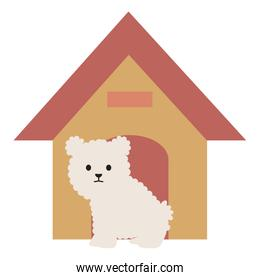 little dog adorable with wooden house