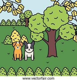 little dogs adorables mascots in the landscape
