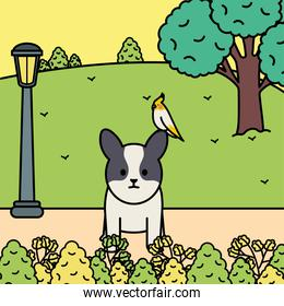 little dog with bird in the park