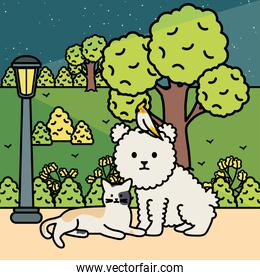 cute cat and dog with bird in the park