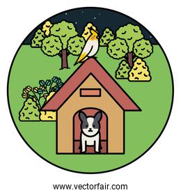 little dog adorable with wooden house and bird in the park