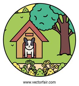 little dog adorable with wooden house in the park