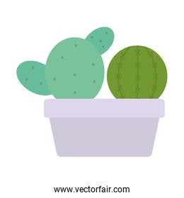 exotic cactus plants in square ceramic pot