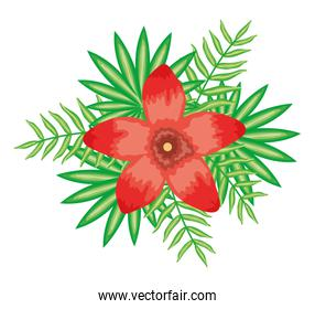tropical flower and leafs plants