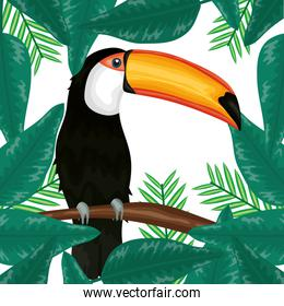 beautiful toucan with exotic and tropical leafs decoration