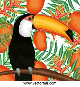 beautiful toucan with tropical fruits and leafs decoration