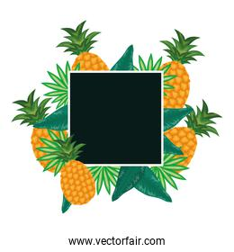 fresh pineapples fruits with leafs frame