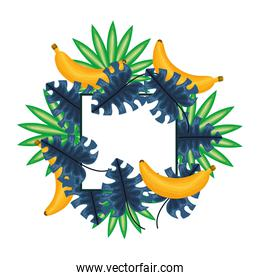 fresh bananas fruits with leafs frame