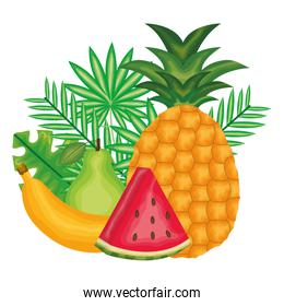 fresh watermelon and tropical fruits