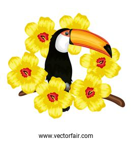 Toucan nature desing vector illustration