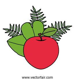 fresh apple fruit and leafs decoration