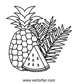 fresh watermelon and pineapple fruits
