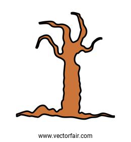 dry tree branches botanical white background