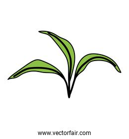 green leaves foliage ecology icon