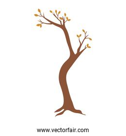 dry tree leaves branches botanical icon