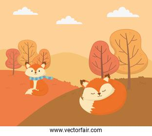 cute foxes forest trees animal foliage hello autumn