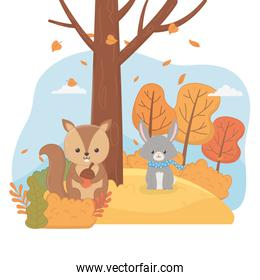 cute squirrel with acorn and rabbit foliage hello autumn