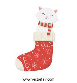 cat coming out sock celebration merry christmas