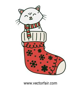 isolated cat coming out sock celebration merry christmas