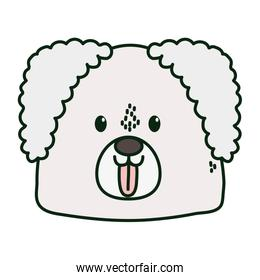 cute dog head tongue out on white background