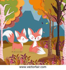 cute foxes in the field hello autumn