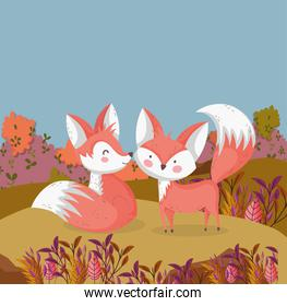cute foxes in the field   autumn