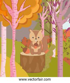 cute squirel with acorns forest trees hello autumn