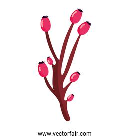 branch berries plant autumn on white background