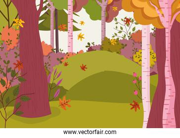 autumn landscape trees forest flowers leaves