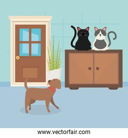 dog and cats sitting in furniture room house pet care