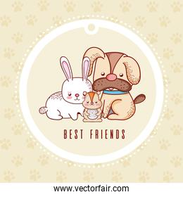 Cute greeting card with pets cartoon