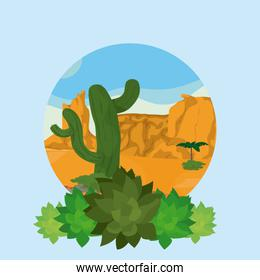 Plant and desert