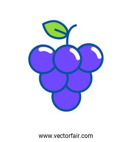 Isolated grapes design