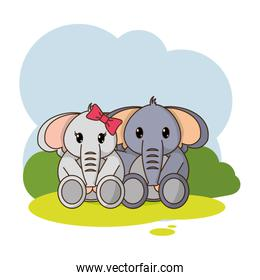 elephant couple cute animal in the landscape